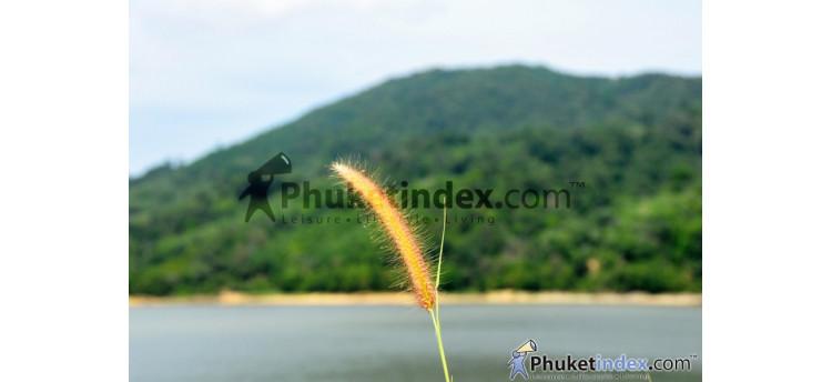 ธรรมชาติที่อุดมสมบูรณ์ ณ บริเวณเขื่อนบางวาด ภูเก็ต